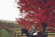 • Equestrian • / Grays are pretty  Bays are smart  But only a chestnut can win ones heart