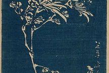 chrisantheme japon