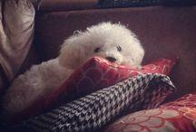 My boy / Cute old dog