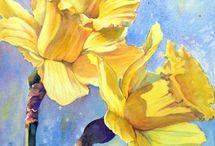 Z narcis, daffodil...