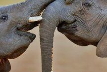 Elephants in Addo, Elephant National Park, South Africa #HeathrowGatwickCars.com
