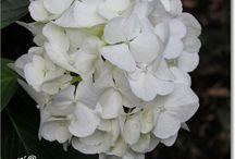 Wit / Alles wat wit is in de natuur of wit benadert.