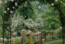 bahçe yolu çiçekli kemer