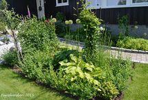 Sommerblomstring // Summer flowering