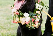 Animals with Flowers, a no-brainer!