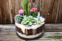 Foliage : Succulents & Cacti