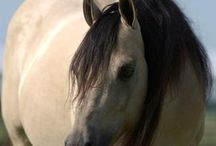 horses / by Richgeana White