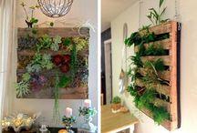 Plantas / Vegetación, macetas, aprovechamiento de recursos en plantas, verde, hierbas, yerbas, flores