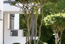 Фактурные деревья в саду
