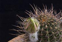 cactus gif
