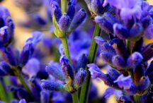 flowers / virágok szépsége