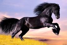 konie Horse  / konie Horse