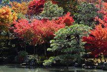 Japonia / Taka piękna, taka odległa.  Japonia~ <3