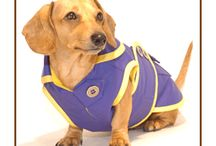 Dachshund Raincoats! / Dachshunds typically do not like to go out in the rain.  These raincoats, designed just to fit them perfectly with their broad chests and long and low stature, will keep them toasty warm and dry!
