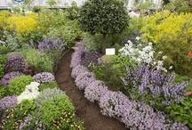 Amys Dream Garden
