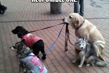 pies na soacer z psami