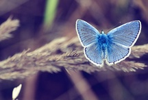 BUTTERFLY- COLORS - NATURE