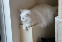 Catlady / Ik heb 4 katten: Piep(cypers) Beertje(zwart) Roosje(wit) en Wampie(rood)