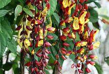 Enredaderas / Plantas y flores