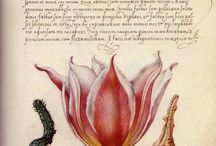 Ботанические иллюстрации