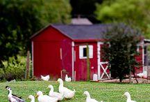 Country Living - Maalaiselämää / ❤️ Country