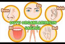 Duyu organları