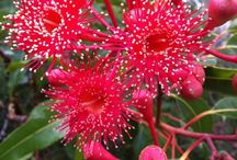 Australian Native Flora / Inspiration from the sometimes wierd but always beautiful native flora from Australia