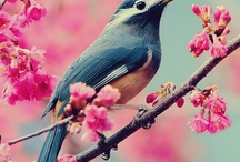 // birds