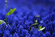 beautifulll  blue