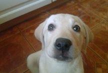 Jesteśmy tu dla nich / Zdjęcia nadesłane przez naszych klientów sklepu www.animals-sklep.eu