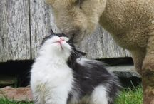 love in couple animals