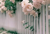 Picket fences, roses and arbours