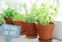 Giardinaggio in vaso / Salotti
