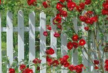 Home Fences / by Terri Garcia