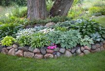 Shade Gardening / Plants, shrubs and flowers that work in the shade garden.