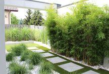Ogród bambusów i traw / Ogród nowoczesny, mniej znaczy więcej. Czyste piękno, elegancja w każdym calu