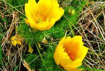 Virágszépségek