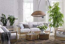 Domácí rostliny