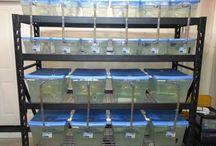 Fish Tank Racks