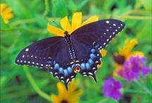 Butterfly / by Luisa Lizano