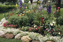 i ᏝᎧᏉᏋ my ❀❀ Gardens ❀❀ / by Mamaj Muah