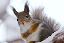squirrel amore