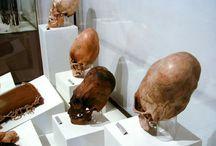homo capensis