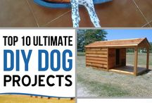 DIY Dog Projects / DIY Dog Projects