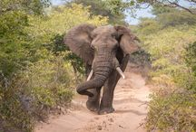 South Africa Adventures / The best of travel around South Africa! / by Liz Carlson