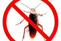 Acabar com insetos