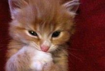 Katzen :D
