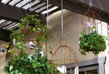 My garden idea's