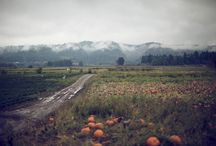 Fall / by Jon Acuff