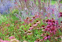 planten combinaties